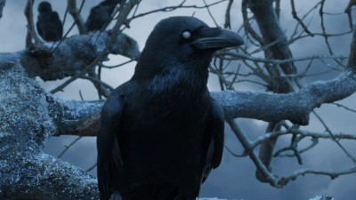 The three eyed Raven